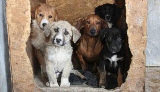 kutyamentés örökbe fogadás adó 1%