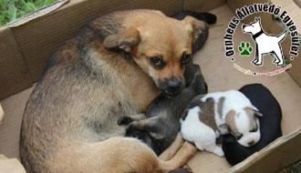 adó 1% kutya cica támogatás