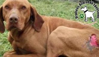 kiskutya felnőtt kutya mentés állatvédő szja 1%