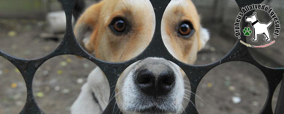 kutya, cica, állatmenhely, örökbefogadás, adóbevalláskor adó 1 felajánlás